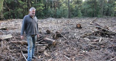 Mount Macedon and District Horticultural Society president Stephen Ryan has called the removal of aspen poplars from the Sanatorium Lake Picnic Ground at Mount Macedon unnecessary and careless.