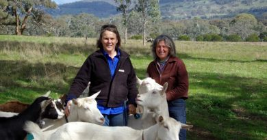 Anne-Marie Monda and Carla Meurs of Holy Goat Cheese with some of their goats at their organic farm in Sutton Grange.
