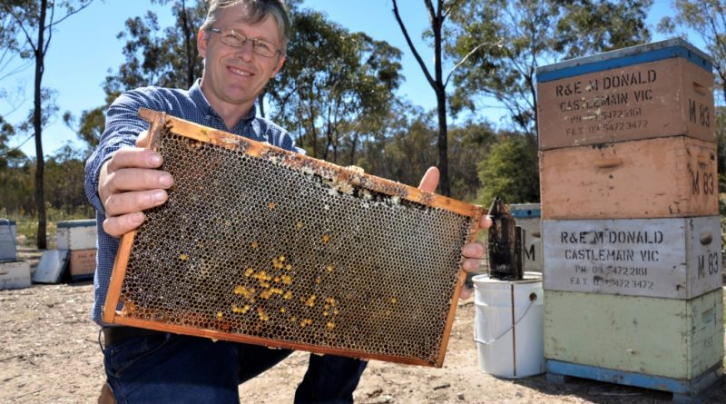 Castlemaine beekeeper and Australia Honey Bee Industry Council chairman, Peter McDonald.