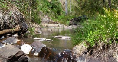 Coliban River, below Trentham.