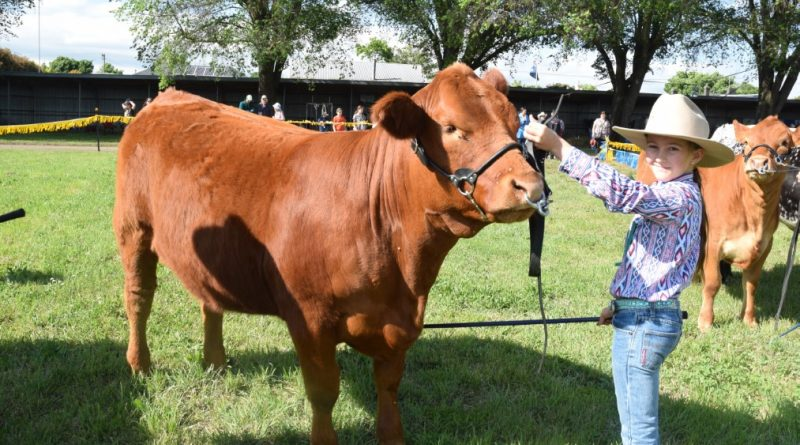 Rhiannon Hohnberg, then 11, shows off her cattle handling skills at last year's Kyneton Show.