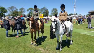 The oval was full of action in the horse competition. Photo: Bernadette Nunn