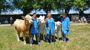 Mount Macedon's Waterford Charolais stud won Supreme Exhibit in the cattle competition, following their supreme exhibit rosette in the Charolais competition at the Royal Melbourne Show. Photo: Bernadette Nunn