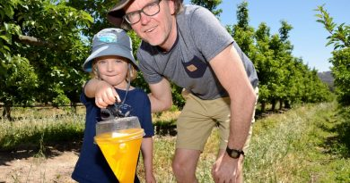 Harcourt's Terry Willis and young son, Sonny, check a male fruit fly trap in one of Harcourt's commercial apple orchards - ahead of this Saturday's fruit fly action plan launch.