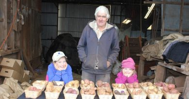 John Dunn is teaching his granddaughters Sophie and Anna how to determine when the spuds are ready for harvest.