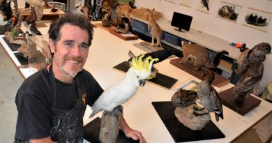Museum preparator, Castlemaine's Ewin Wood, with natural history taxidermy display models ahead of next month's taxidermy workshop.
