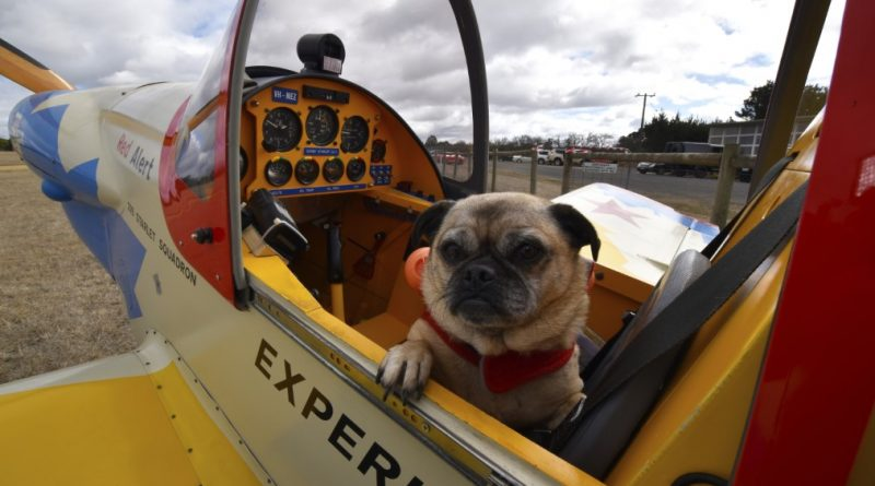 Local pilot Norm Edmunds turned heads with his brightly painted 'Starlet' sports aircraft which came completed with a rocket-powered pooch named Polly. Photo: ietsystems.com.au