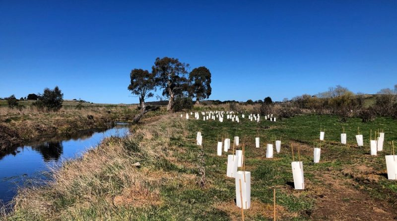 Campaspe River landowners unimpressed with offsets project